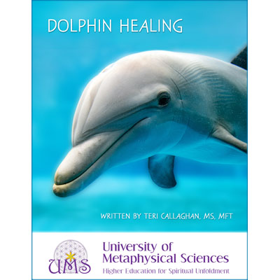 image Dolphin Healing By Teri Callaghan